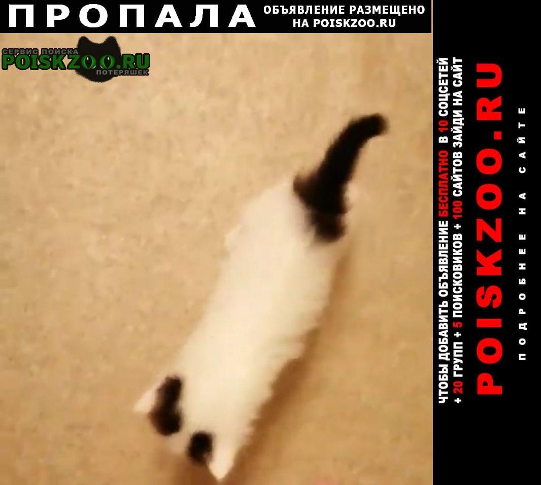 Пропал кот Калач-на-Дону
