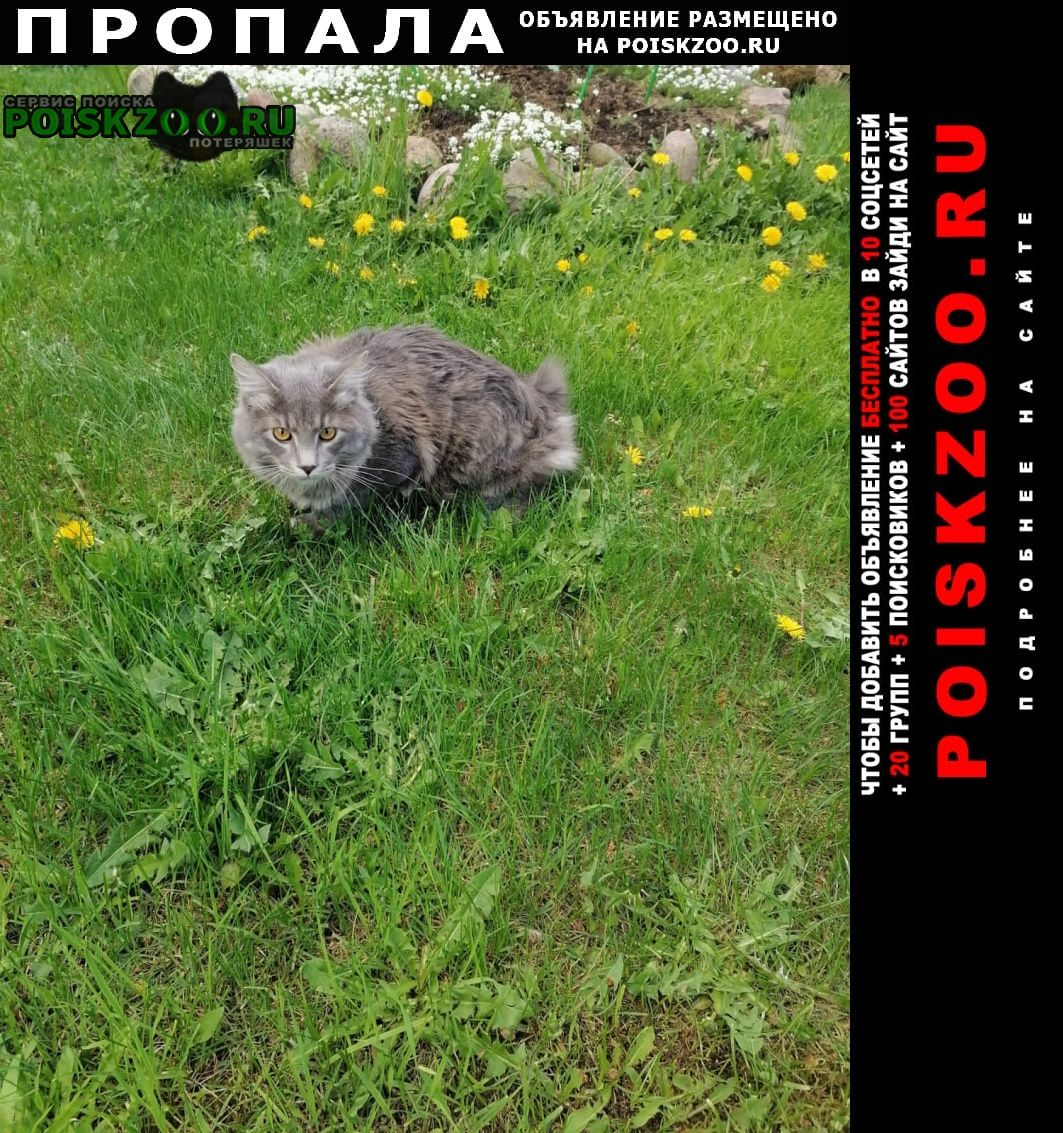 Пропал кот мельничный ручей Всеволожск