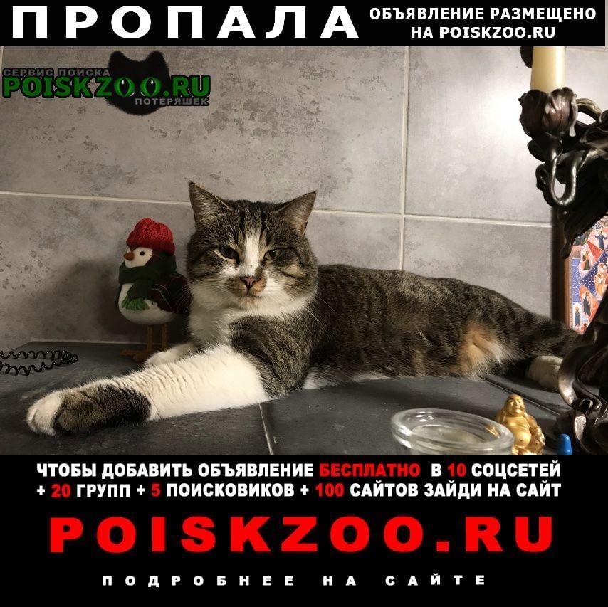 Пропал кот ищем Нижний Новгород