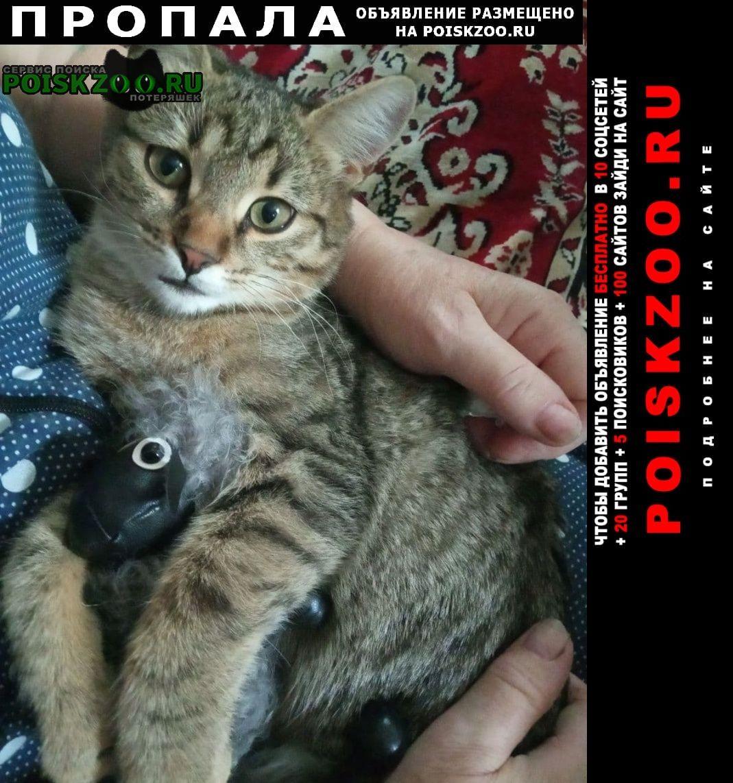 Пропал котёнок Подольск