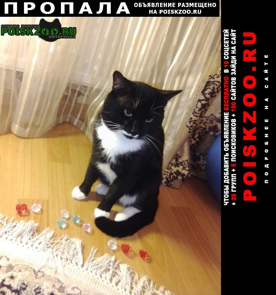 Пропал кот кузя, 5 лет ий р-н Можайск