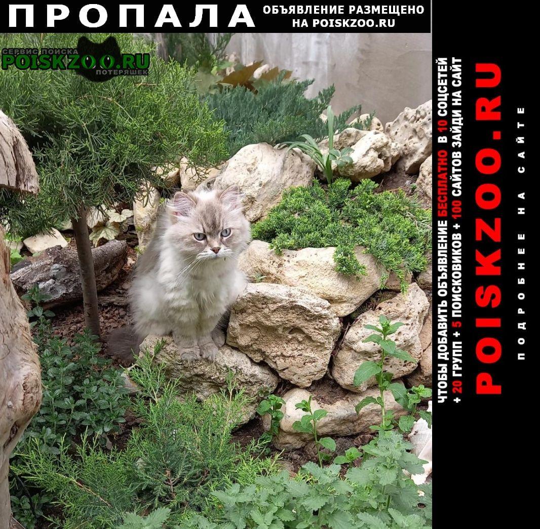 Пропала кошка на пересечении ул.партизанская/татарская Евпатория