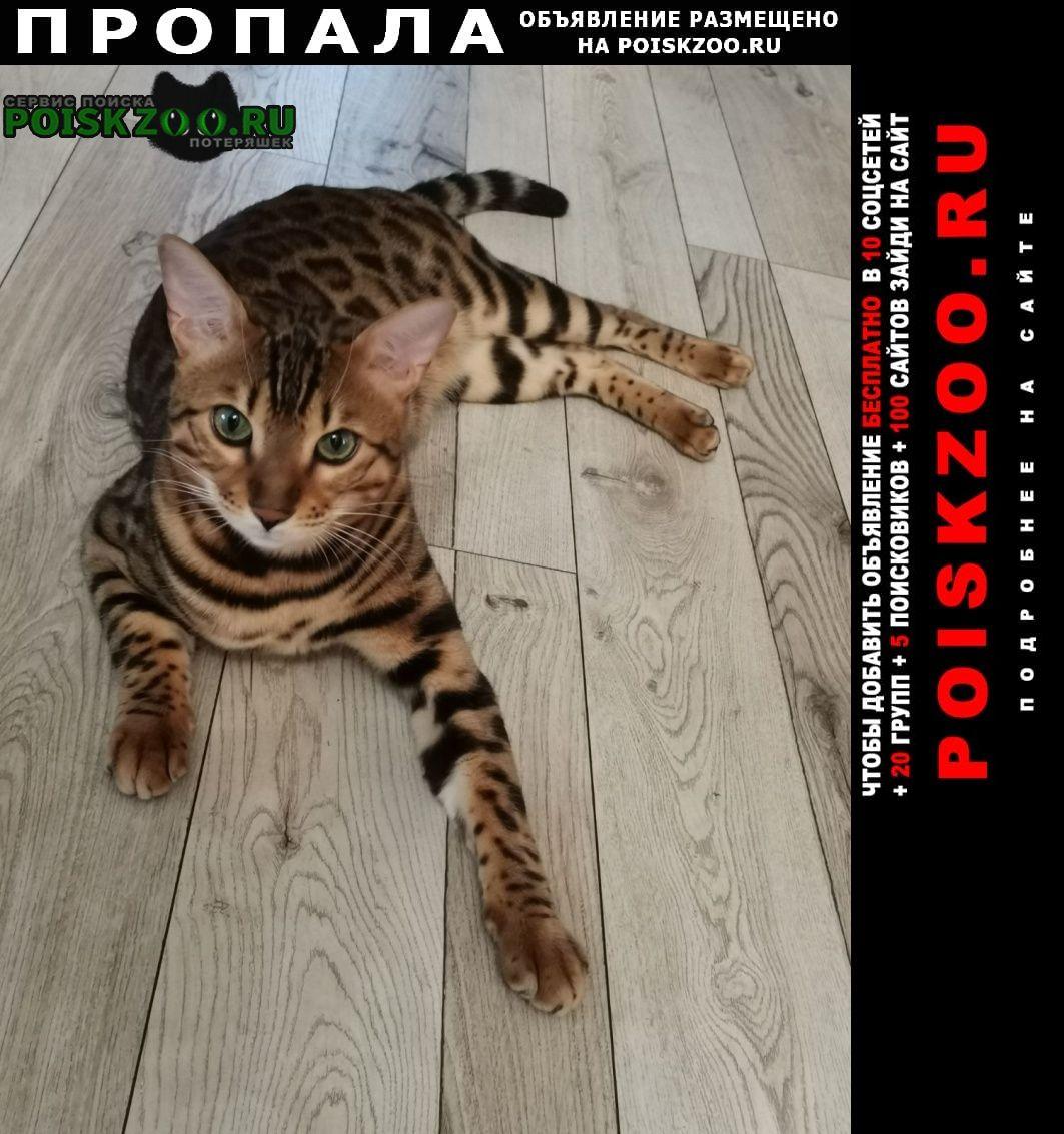 Пропал кот друг Иваново