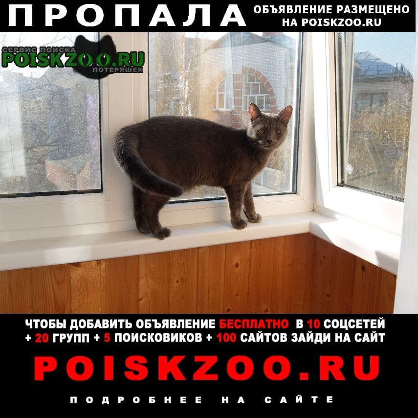 Пропал кот центр нижнего новгорода Нижний Новгород