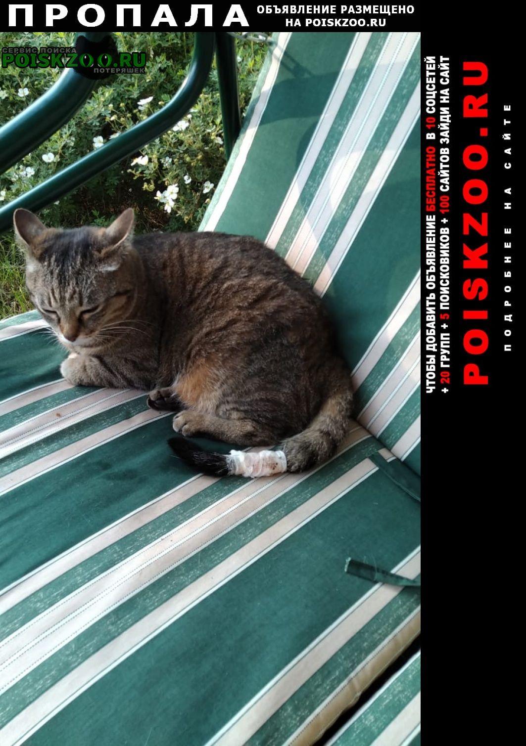 Пропала кошка вознаграждение гарантировано Малаховка