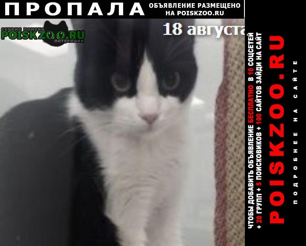 Пропала кошка черно-белая Родники (Московская обл.)