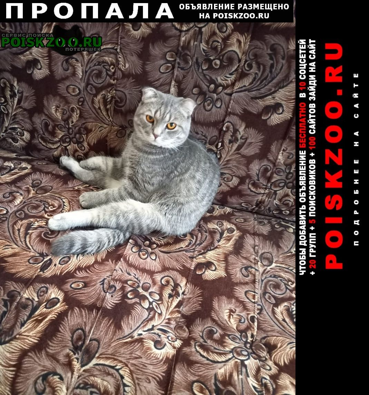Пропал кот Оренбург