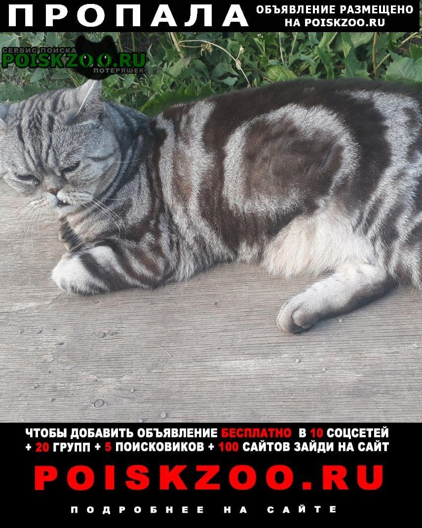 Пропал кот в с.березово кемеровский р-н Кемерово
