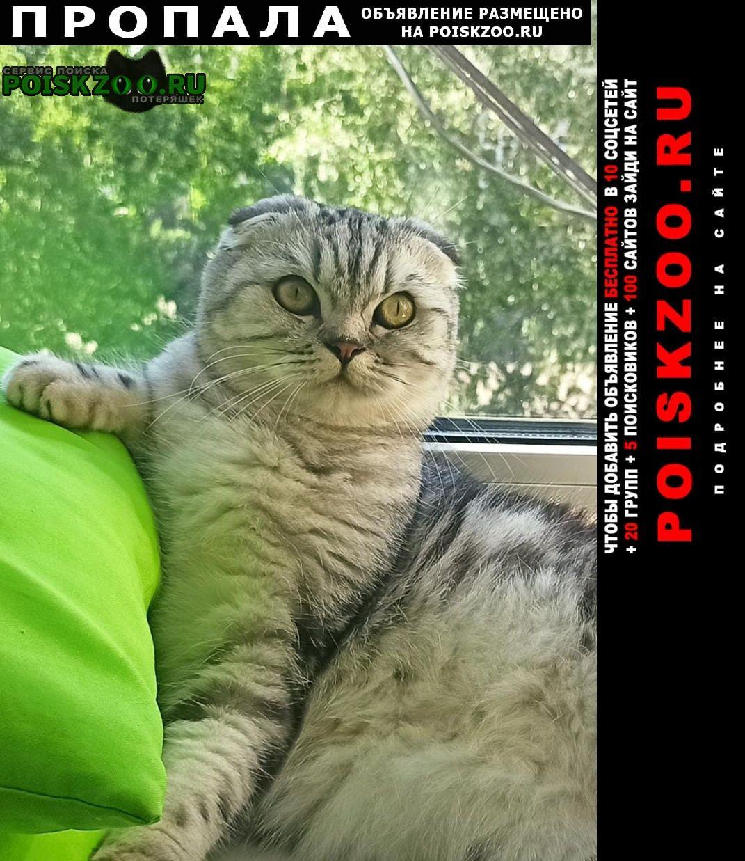 Пропала кошка помогите найти кошечку Ярославль