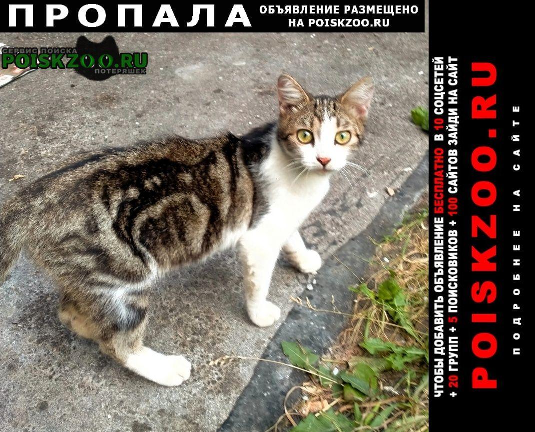 Пропала кошка ул. мончегорская, Нижний Новгород