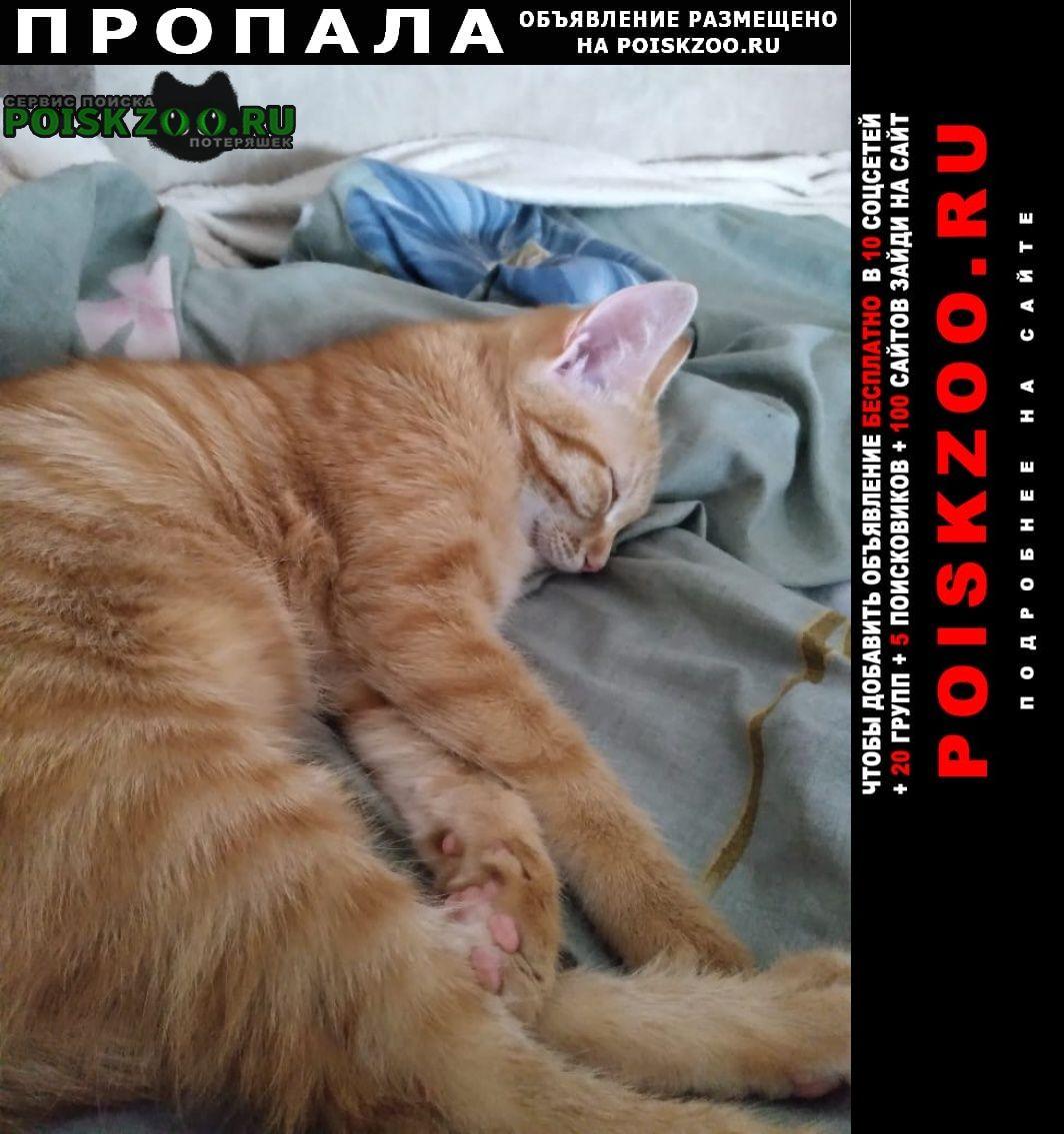 Пропала кошка котенок Кемерово
