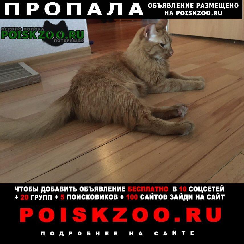 Пропал кот любимый ик Люберцы