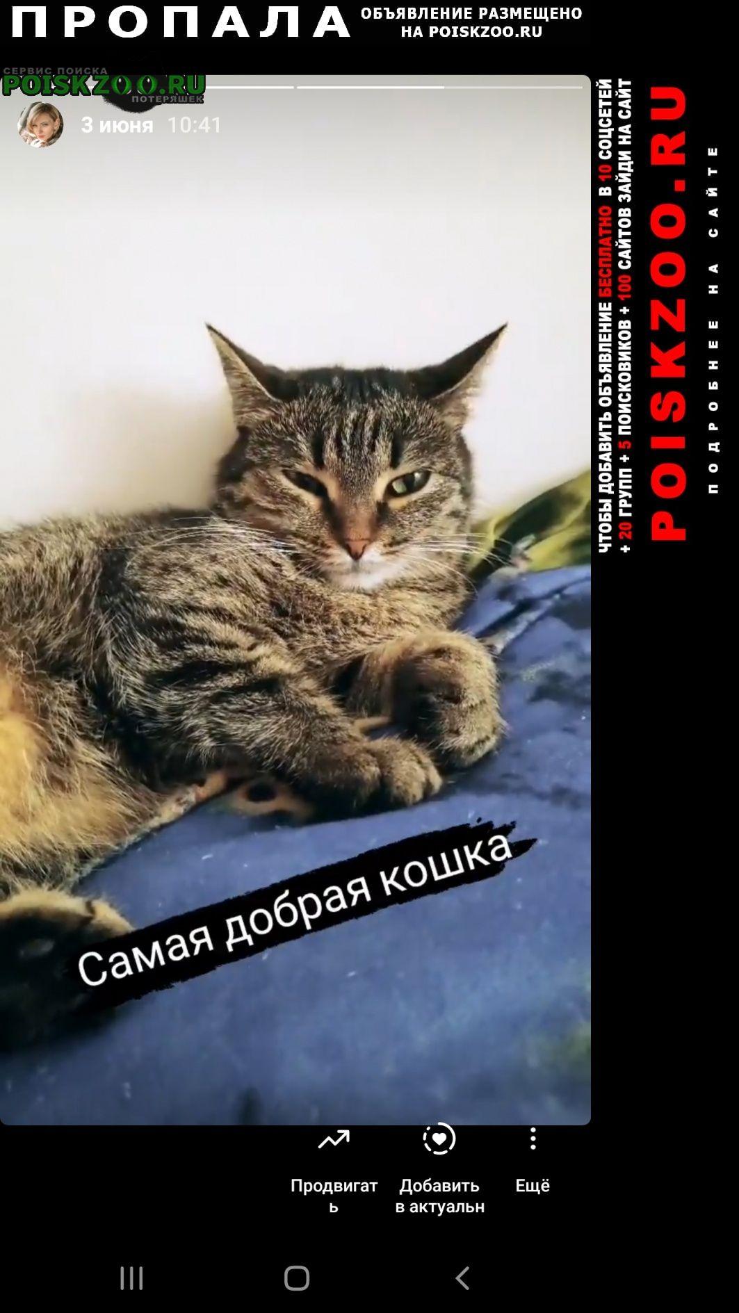 Пропала кошка Сосновоборск (Красноярский край)