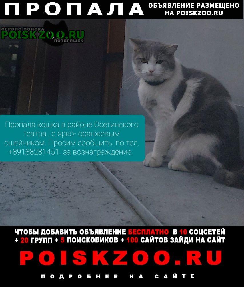 Пропала кошка стерилизована Владикавказ