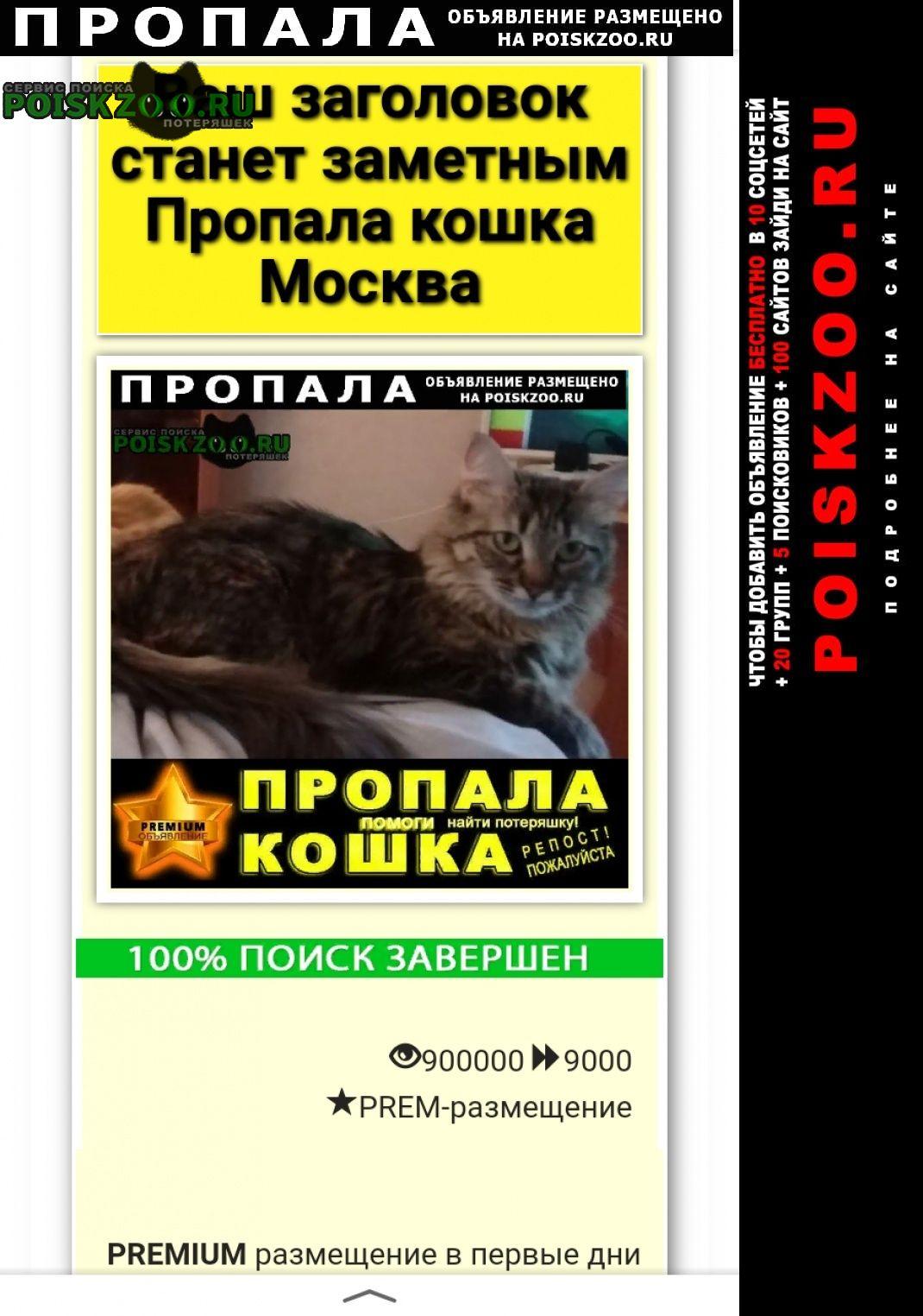 Пропала кошка на ул.островитянова 45 Москва