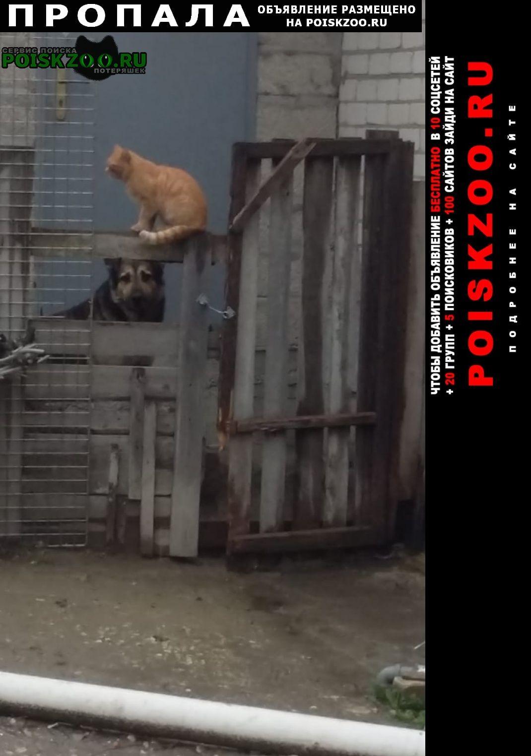 Пропал кот шурик Новороссийск