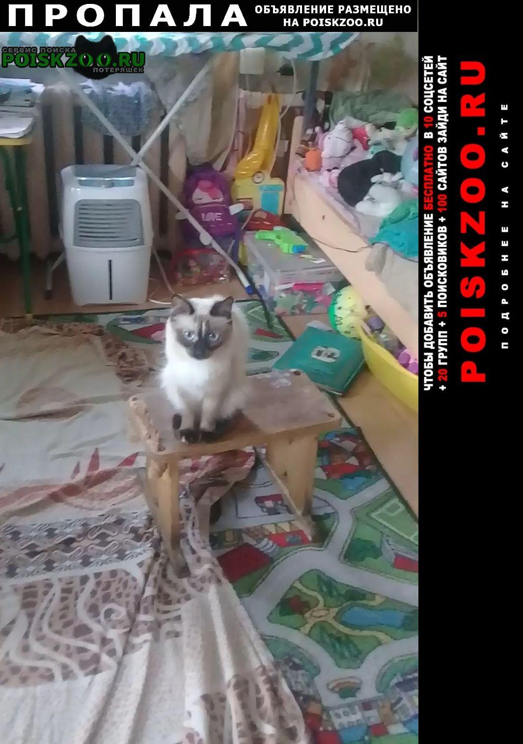 Пропала кошка помогите пожалуйста Челябинск