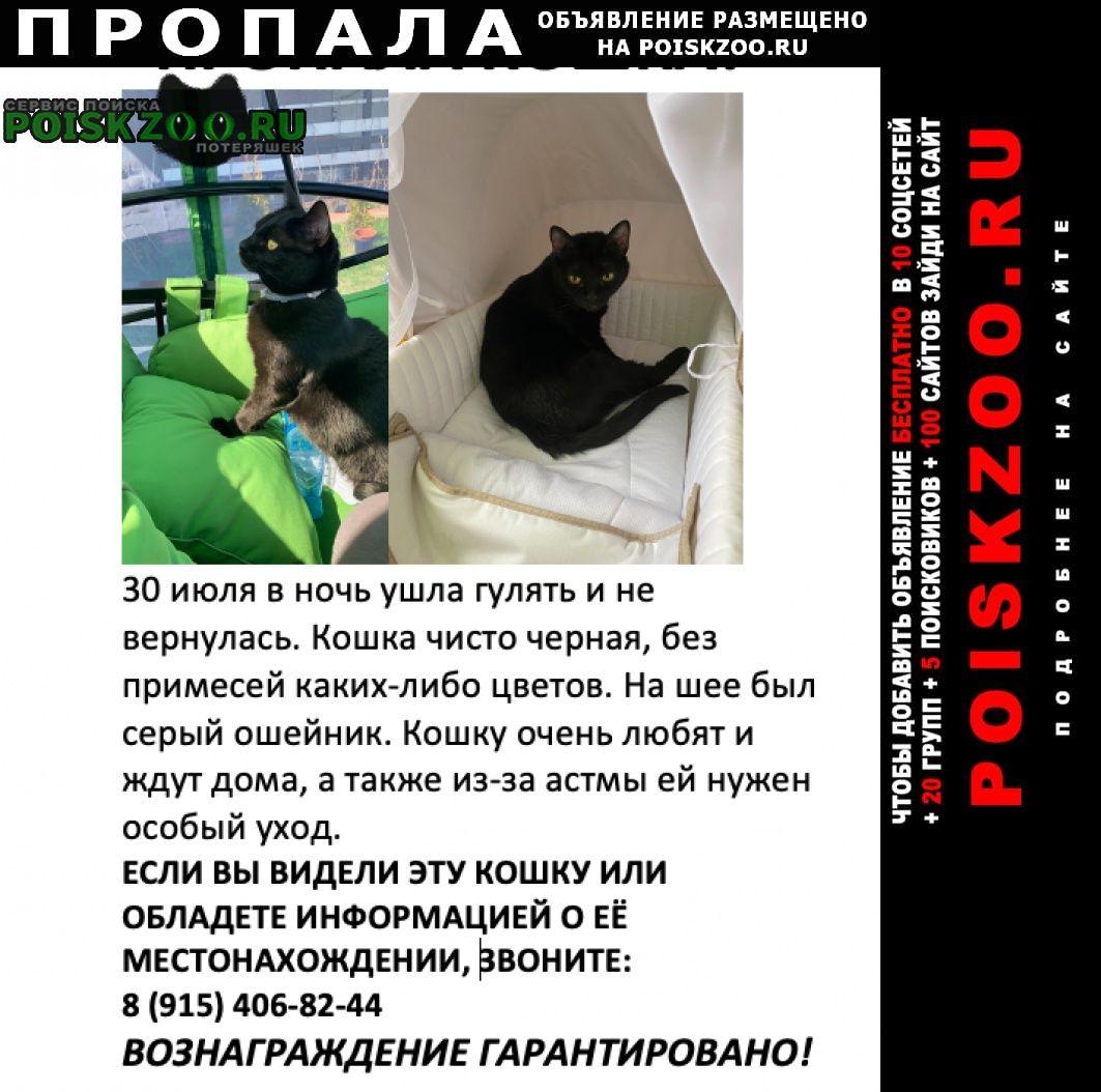 Пропала кошка нашедшим вознаграждение 5000рублей Звенигород