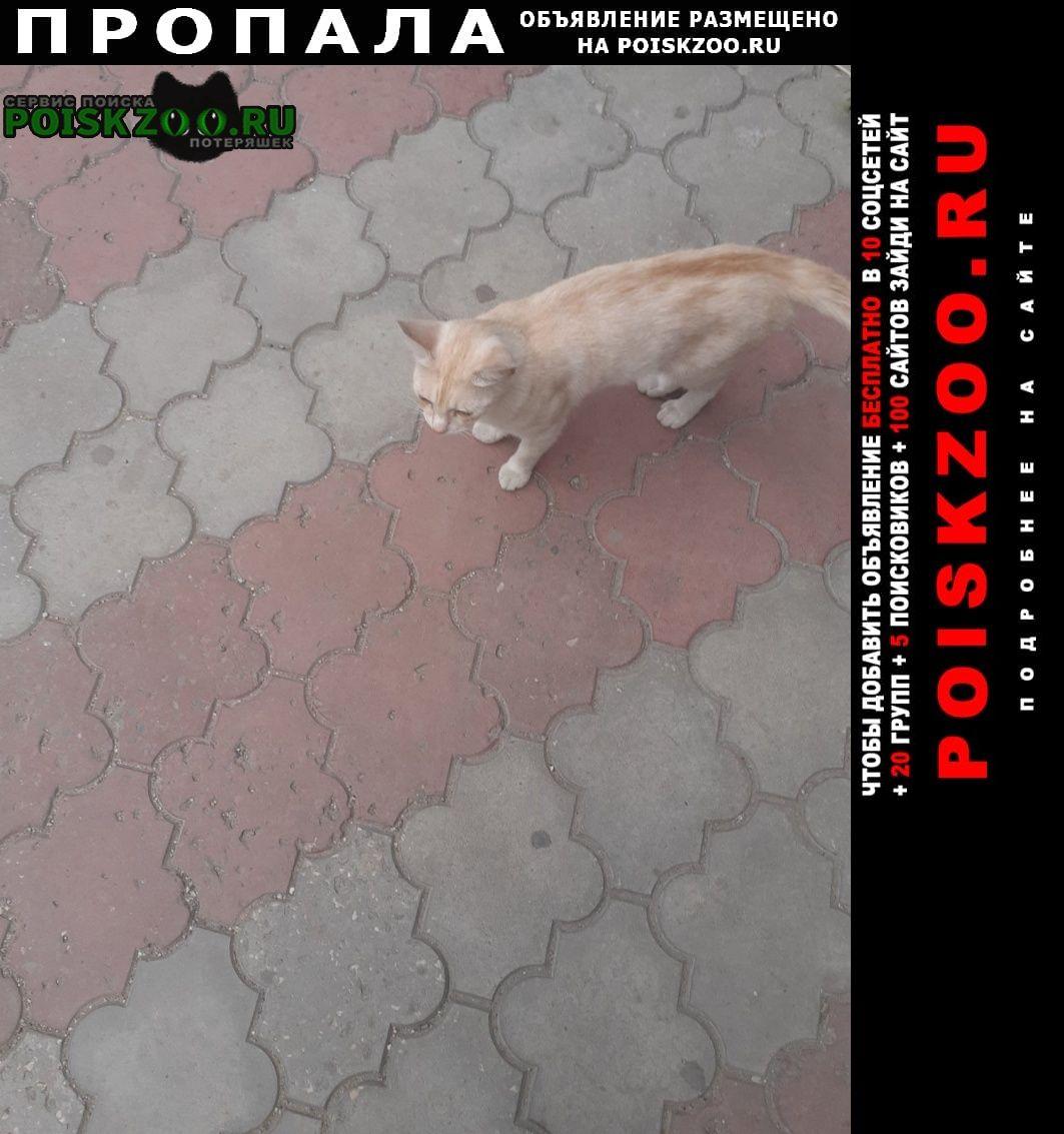 Пропала кошка Симферополь