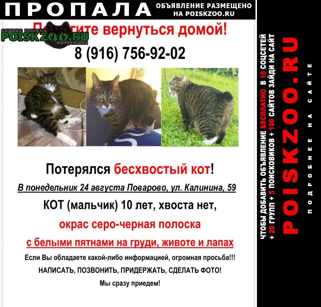 Пропал кот без хвоста Зеленоград