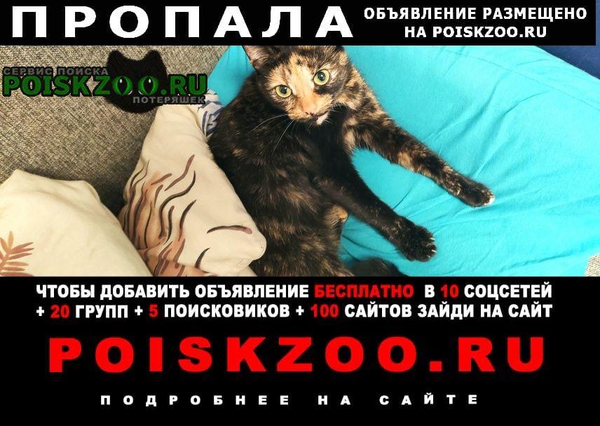 Пропала кошка между метро дыбенко и большевиков Санкт-Петербург