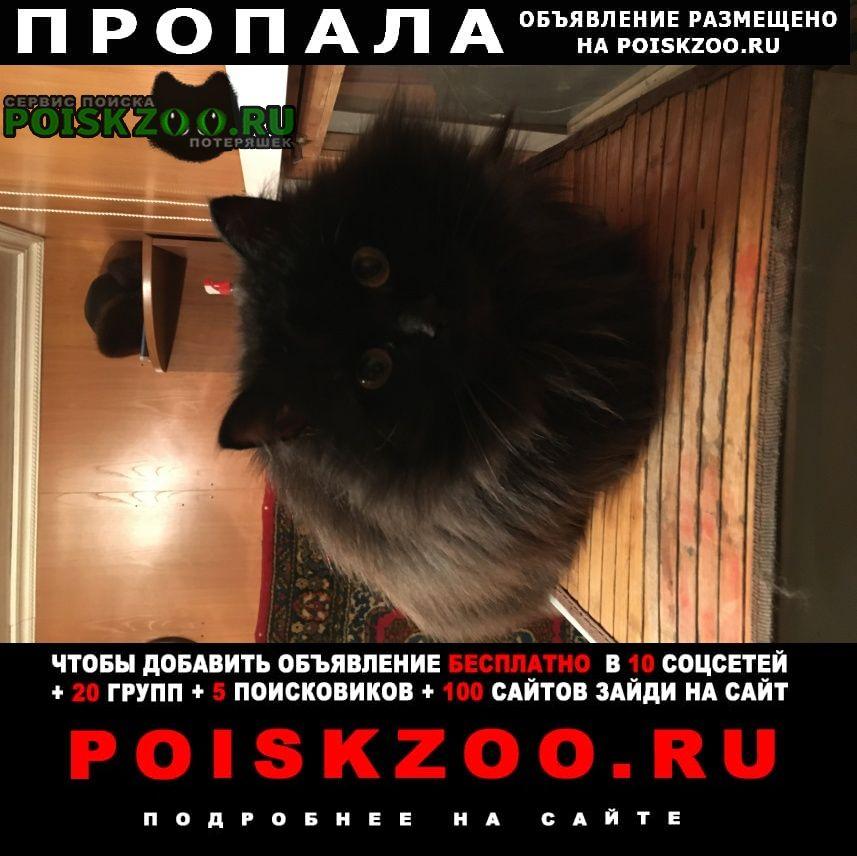 Пропала кошка черная Красноярск