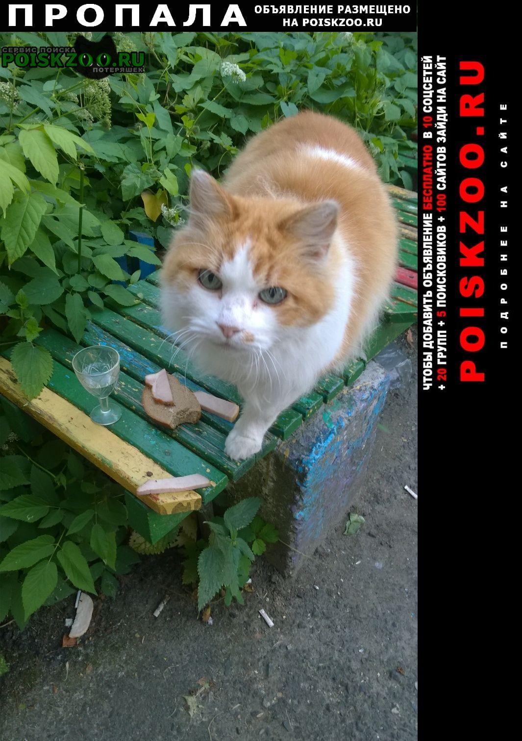 Пропал кот 12 лет ул чкалова 19/3 Витебск
