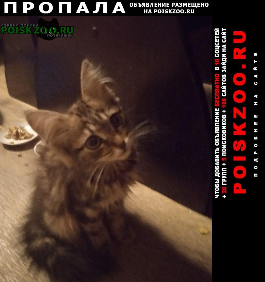 Пропала кошка котёнок, девочка, возраст 3 месяца, Тула