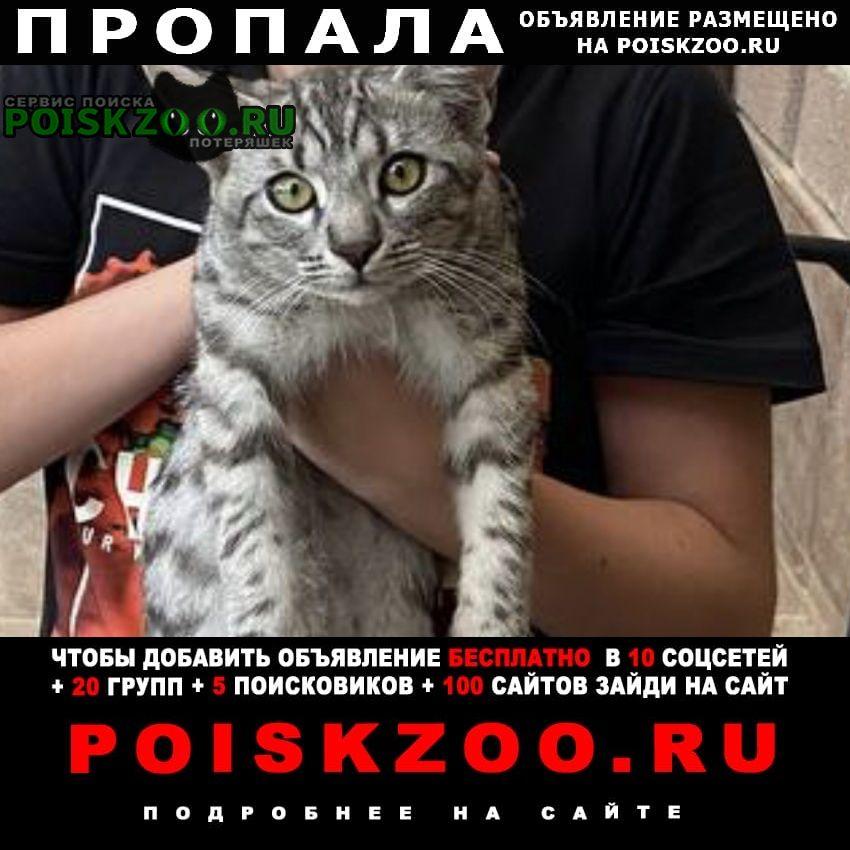 Невинномысск Пропал кот