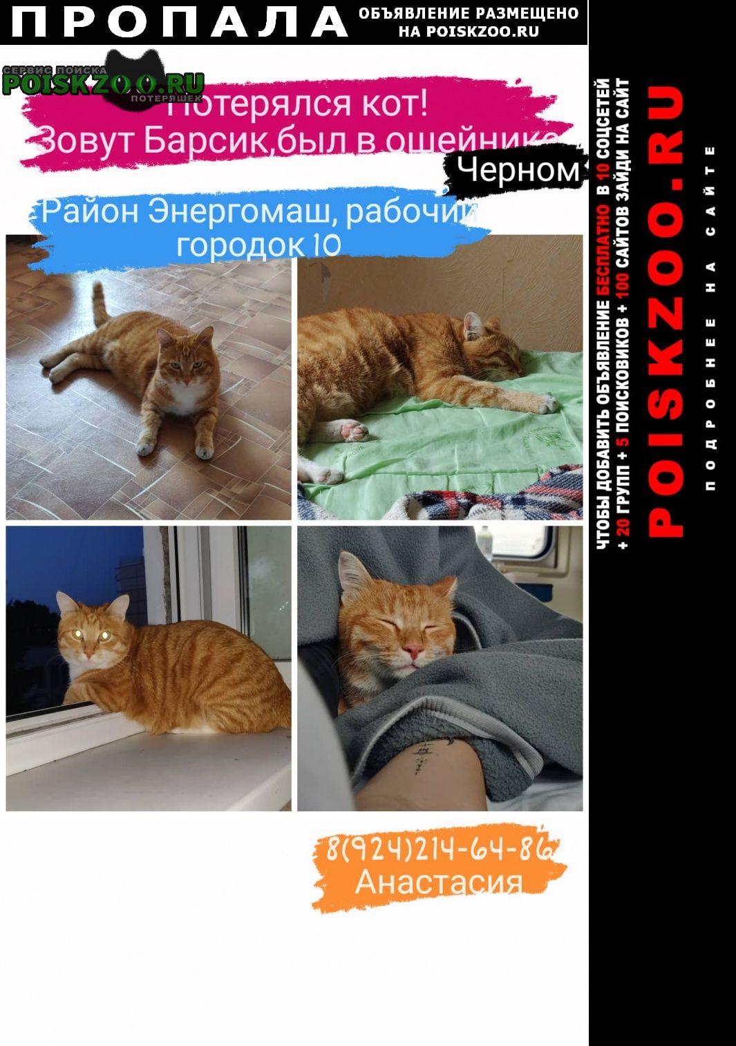 Хабаровск Пропал кот барсик