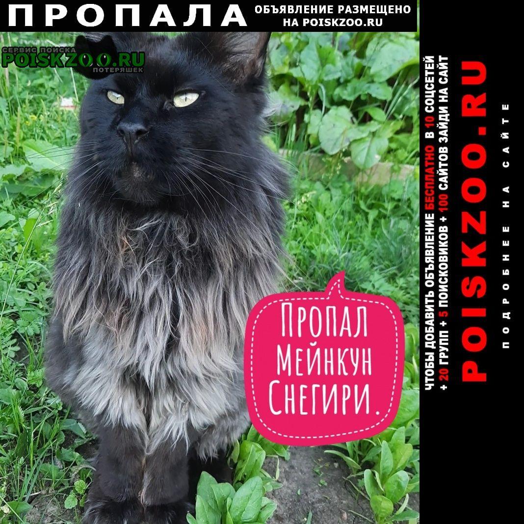 Пропал кот мейнкун Москва