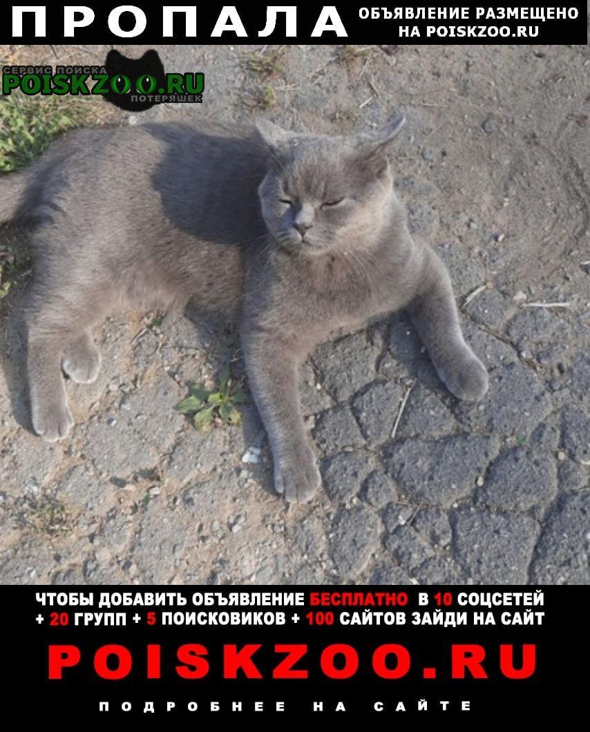 Пропала кошка британка с жёлтыми глазами Озерск(Челябинская обл.)