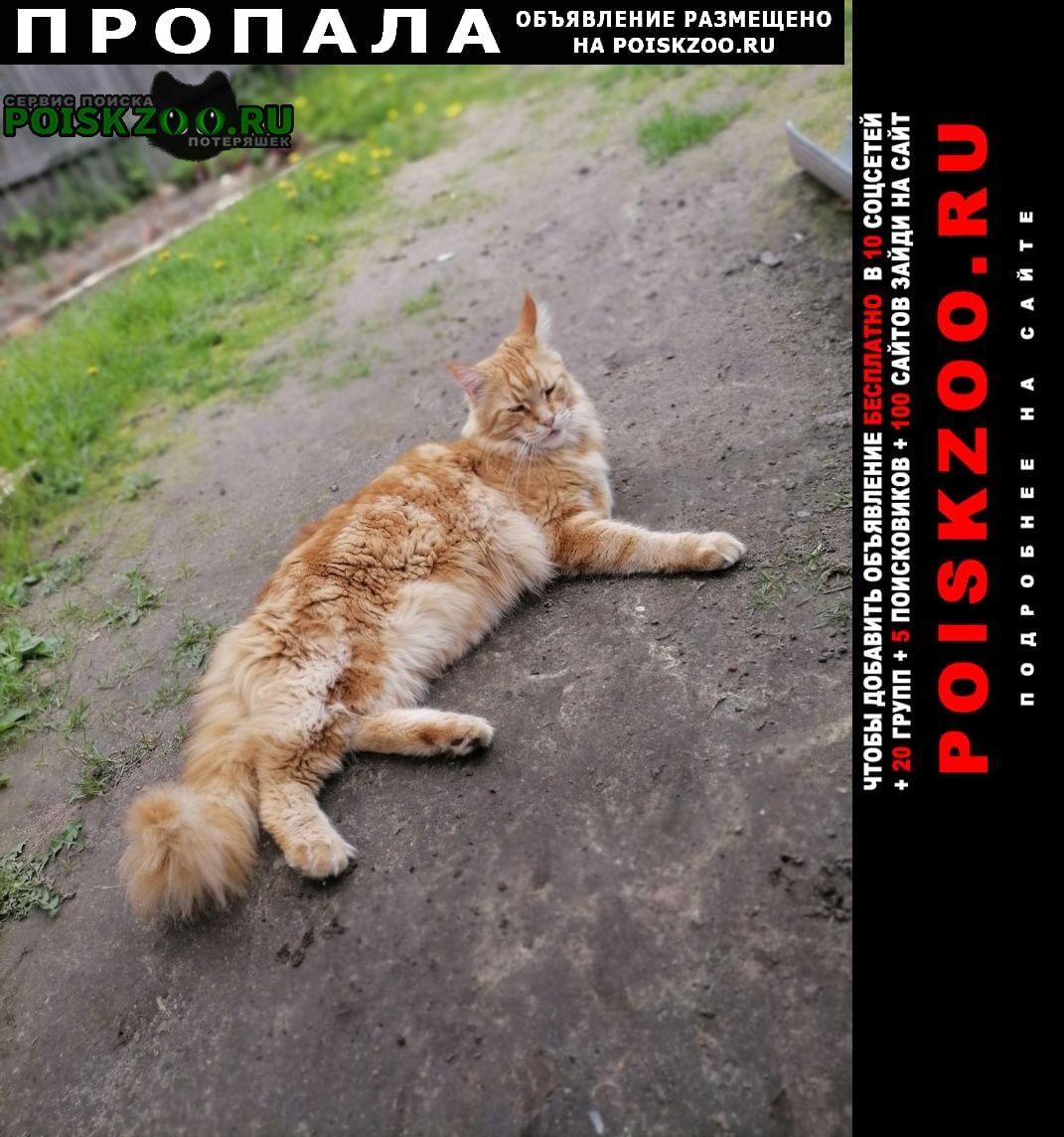 Фирово Пропал кот порода мейн кун