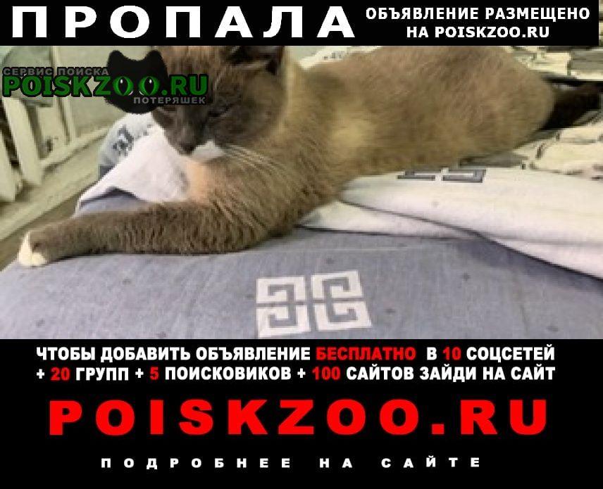 Шаховская Пропала кошка метис сиамской