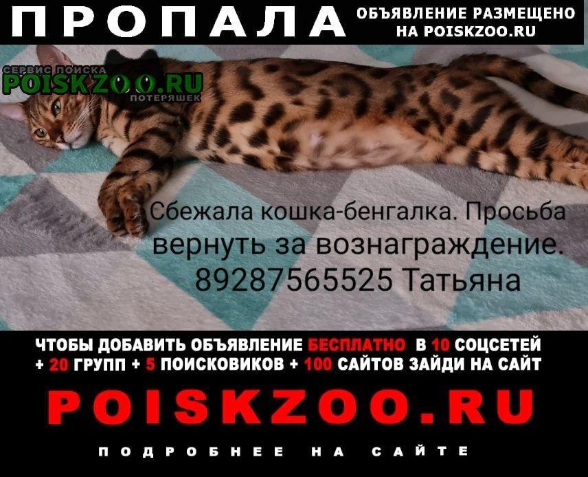 Волгодонск Пропала кошка бенгалка