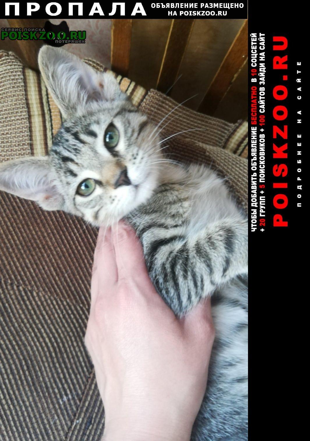 Ульяновск Пропала кошка котенок