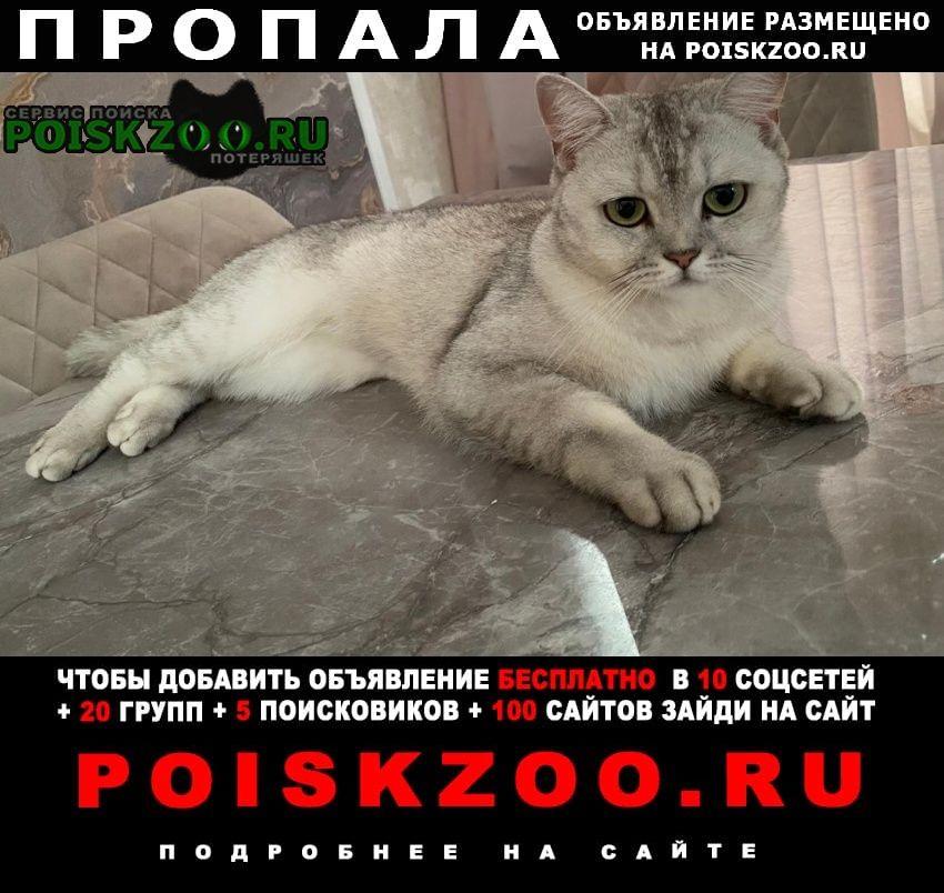 Краснодар Пропала кошка