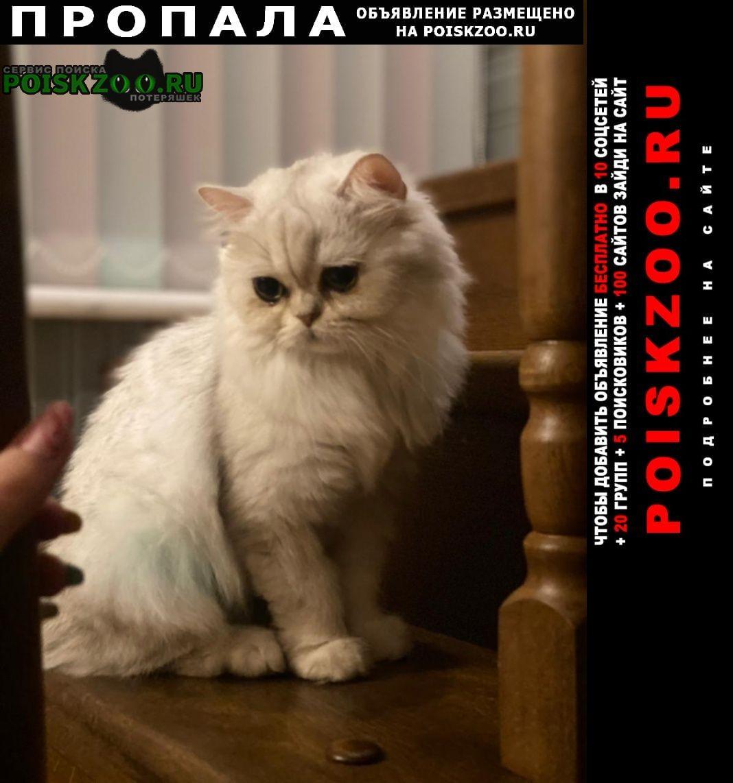 Хоста Пропала кошка белая и пушистая