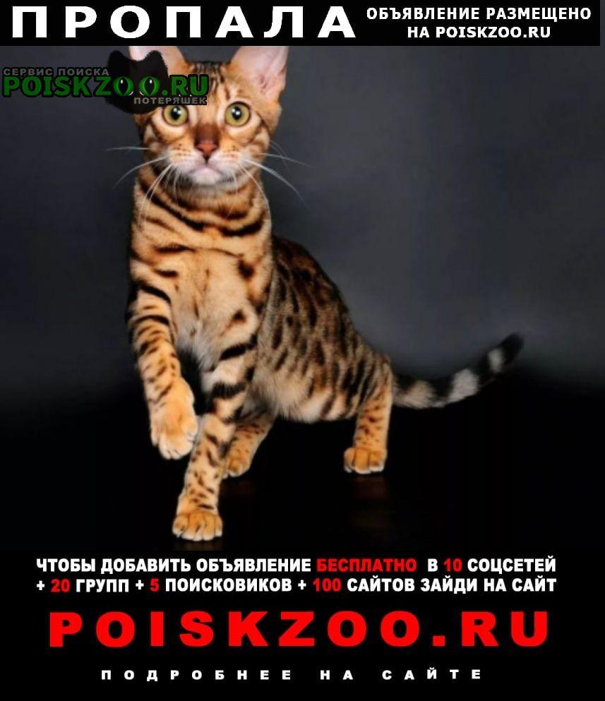 Тамбов Пропала кошка бенгальская