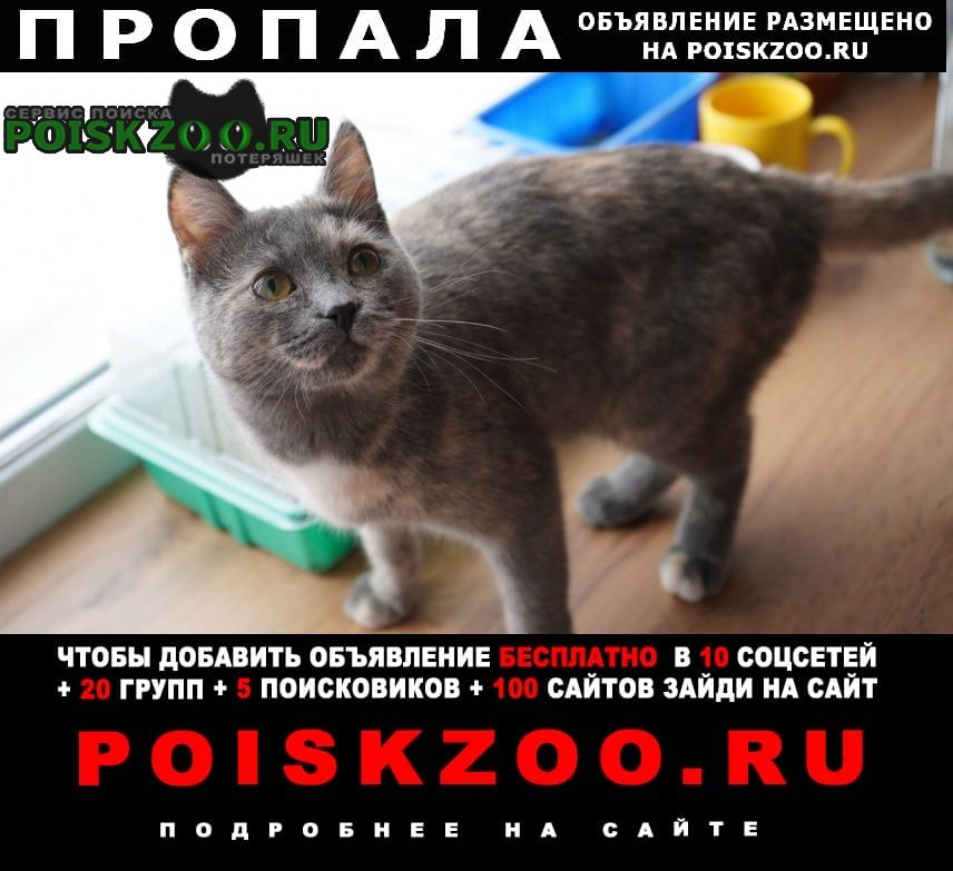 Нижний Тагил Пропала кошка в районе станции переливания крови