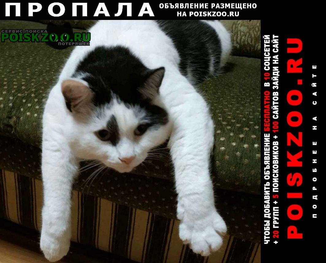 Иваново Пропал кот