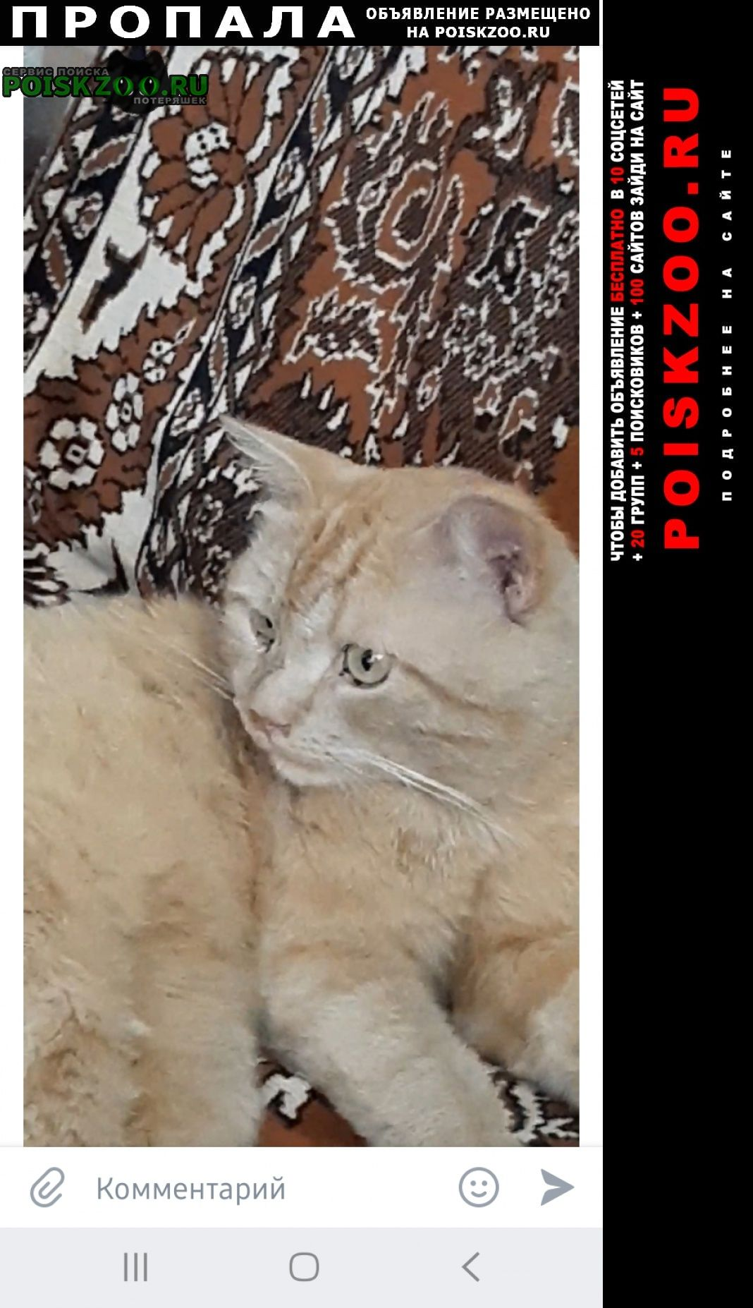 Пропал кот Сызрань