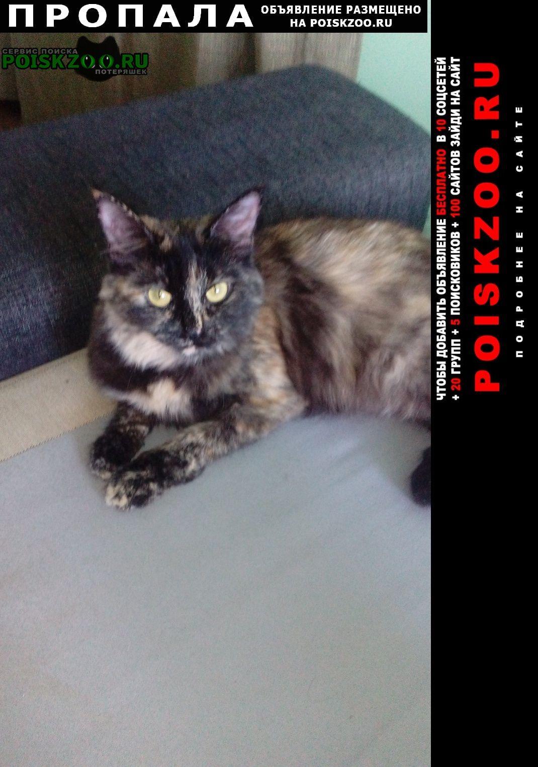 Богородск Пропала кошка