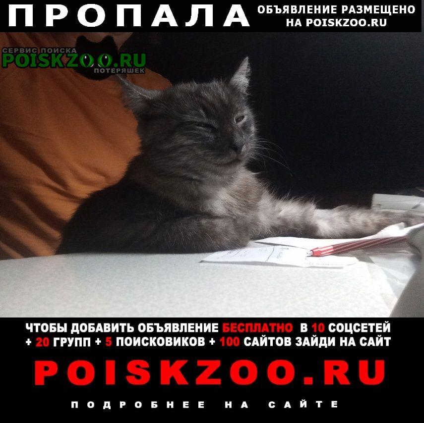 Пропала кошка помогите найти кошку Нахабино