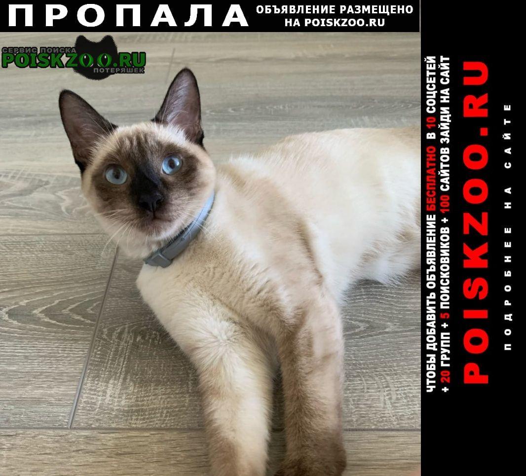 Москва Пропала кошка потерялась кошечка