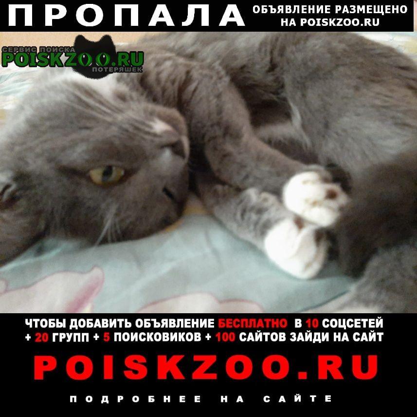 Краснокамск Пропал кот