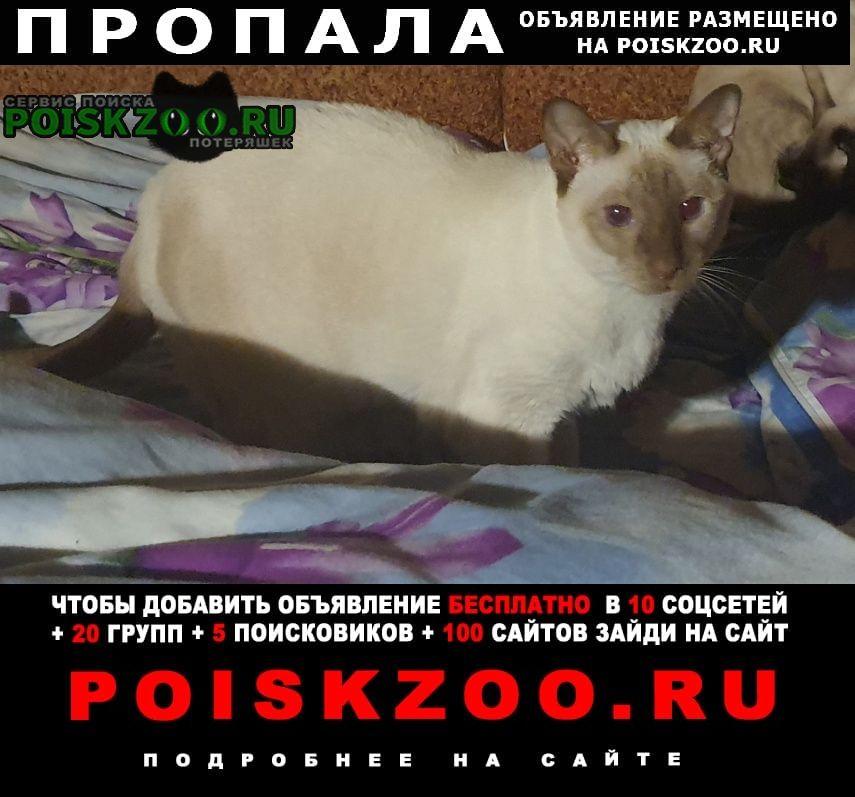 Солнечногорск Пропала кошка смирновка-2