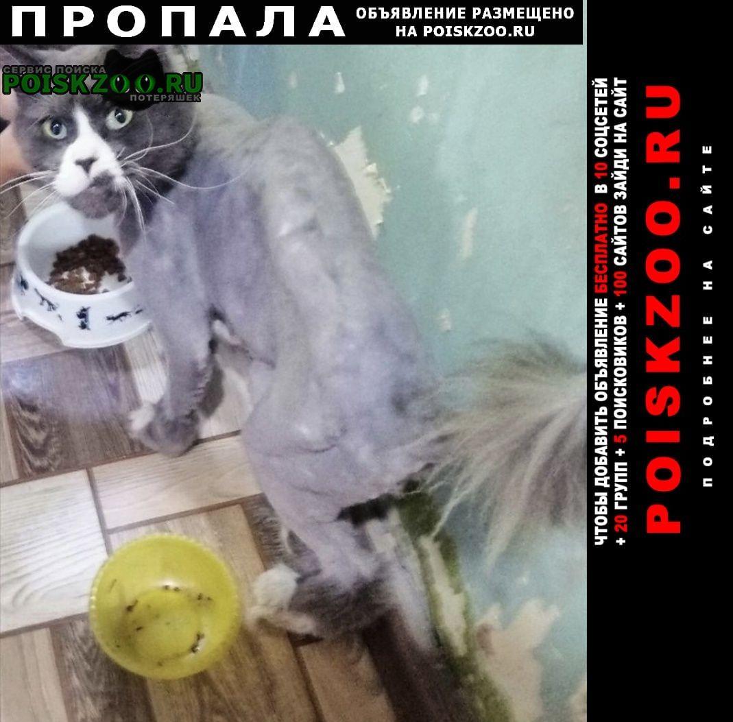 Пропал кот Ульяновск