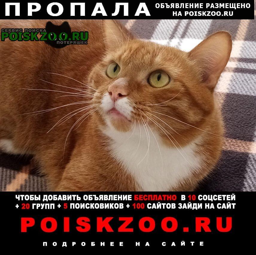 Звенигород Пропал кот рыжий с белыми усами