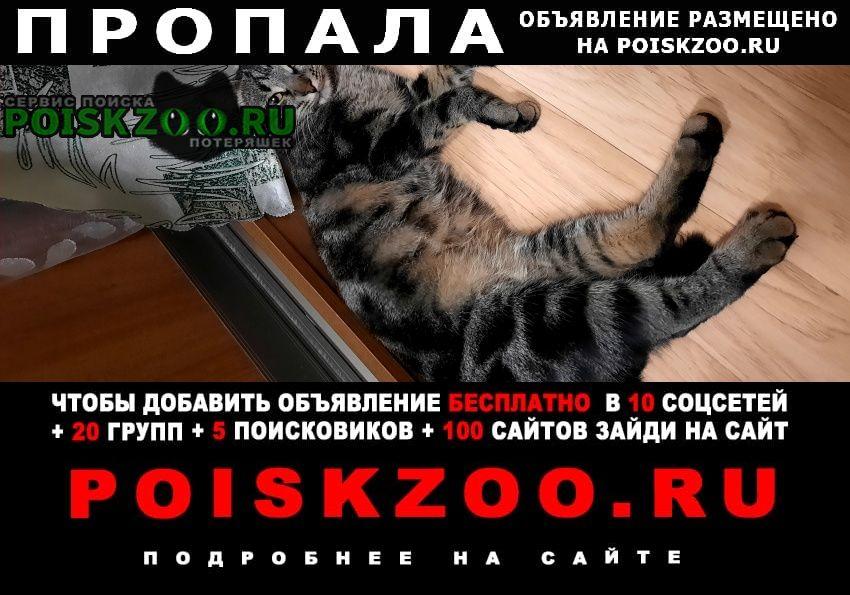 Пропал кот барс Обнинск